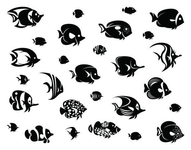 Royalty Free Angelfish Clip Art, Vector Images