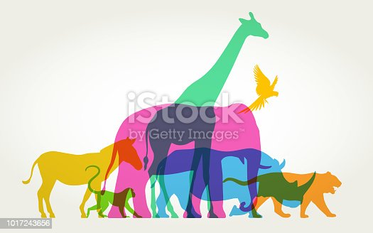 istock Group of Wild Animals 1017243656