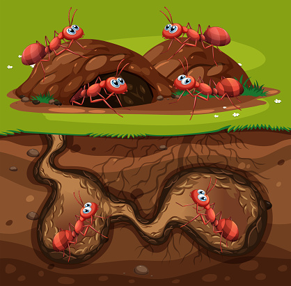 A Group of Working Ants in Hole