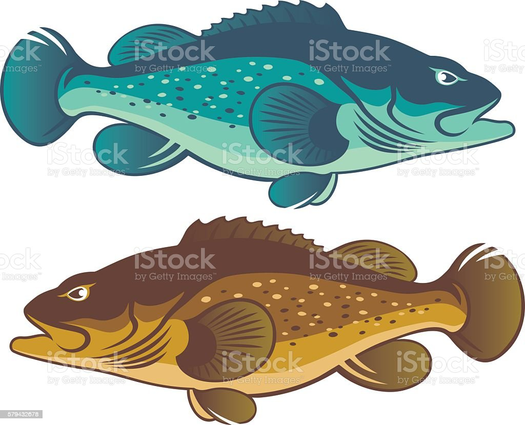 Grouper vector art illustration