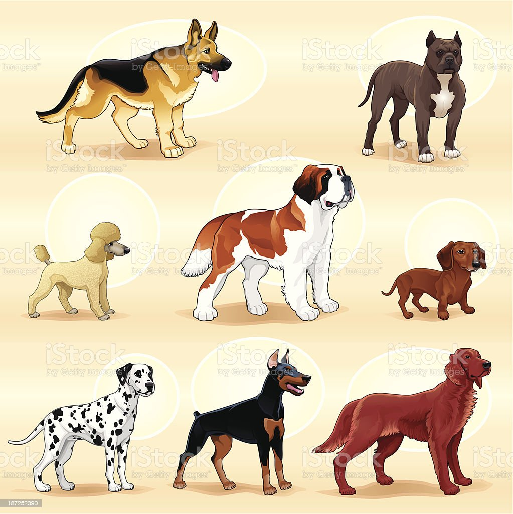 A groups of different dog breeds vector art illustration