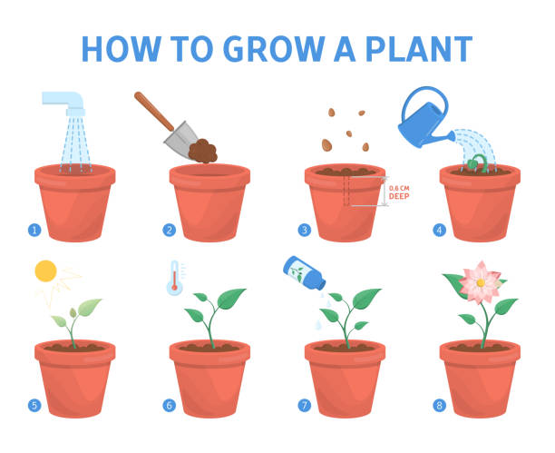Growing a plant in the pot guide vector art illustration