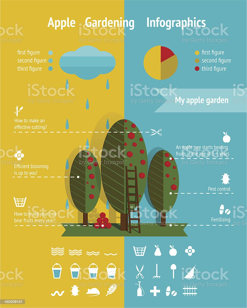 Growing Apple Garden Infographics Elements royalty-free growing apple garden infographics elements stock vector art & more images of advice