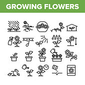 Growing Flowers Plants Collection Icons Set Vector. Growing Flowers In Greenhouse And Pot, Planting, Cultivating And Harvest Concept Linear Pictograms. Monochrome Contour Illustrations