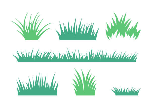 Growing Grass and Cultivated Lawn Silhouettes and Symbols vector art illustration