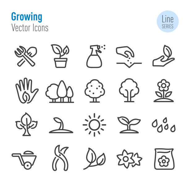 stockillustraties, clipart, cartoons en iconen met groeiende icons - vector line serie - zaaien