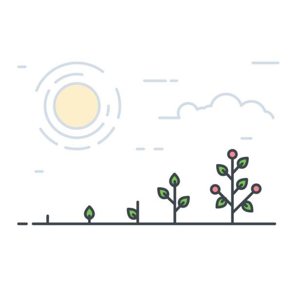 Growing line tomatos vector art illustration