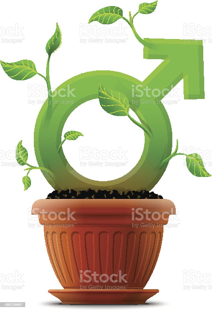 Growing male symbol like plant with leaves in flower pot vector art illustration