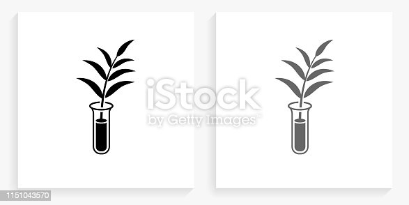 Growing Plant Black and White Square Icon. This 100% royalty free vector illustration is featuring the square button with a drop shadow and the main icon is depicted in black and in grey for a roll-over effect.