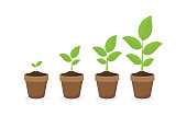 growing plant in process, concept of planting process in flat design, how to grow tree from the seed in the garden easy step by step. Vector illustration