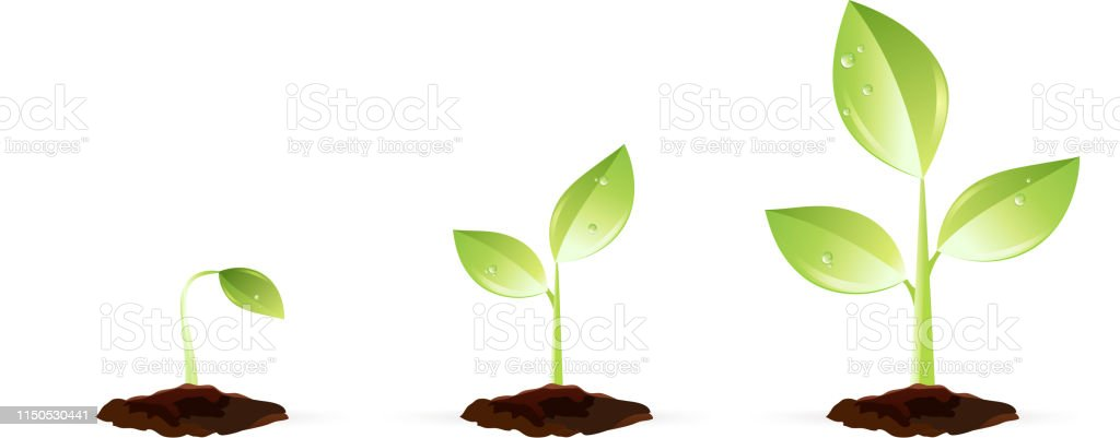 Plante En Croissance Vecteurs Libres De Droits Et Plus D