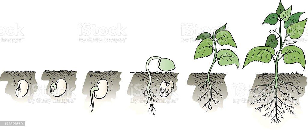 Crecimiento de planta ilustración de crecimiento de planta y más banco de imágenes de aparición - conceptos libre de derechos