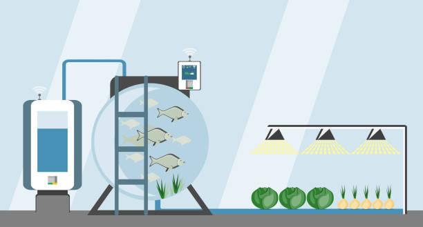 ilustrações de stock, clip art, desenhos animados e ícones de growing plants on the field. - aquacultura