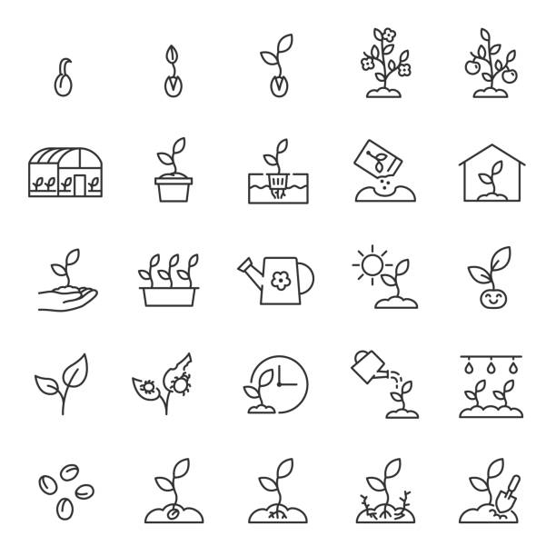 growing plants. sprout in the ground. farming and gardening, icon set. sprout care, linear icons. plant in the ground, greenhouse and hydroponic systems. editable stroke - рост stock illustrations