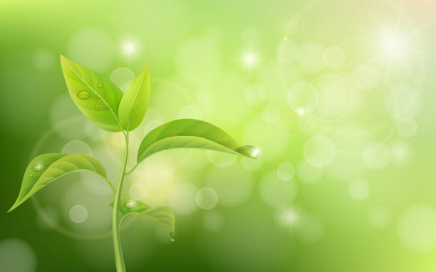 ilustrações de stock, clip art, desenhos animados e ícones de growing sprout on green background - macro