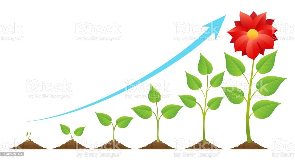 Growing stages cycle vector art illustration