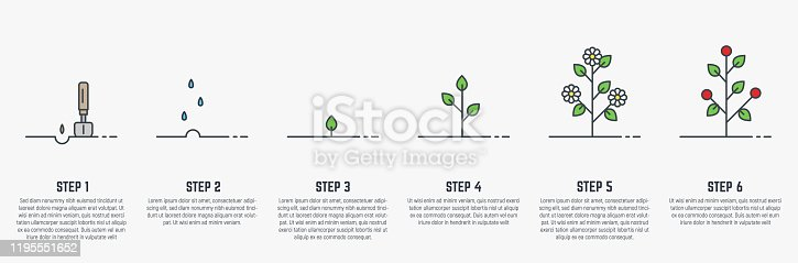 istock Growing stages of plant 1195551652