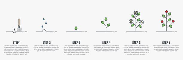 wachsende stadien der pflanze - heben stock-grafiken, -clipart, -cartoons und -symbole