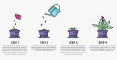 Growing plant stages. Seeds, watering can, sprout and grown plant. House plant in flowerpot. Line style flat illustration of house plant with leaves in pot. Thin lines. Grow process.