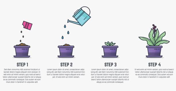 phasen der pflanze wächst - zeichensetzung stock-grafiken, -clipart, -cartoons und -symbole