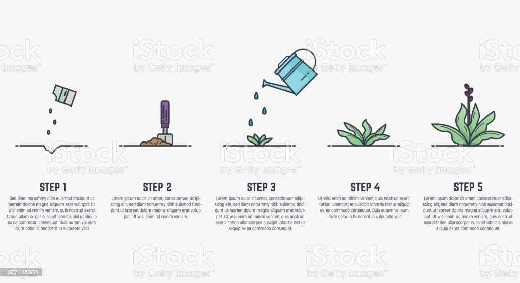 Growing stages of plant vector art illustration