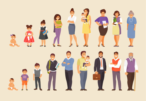 Growing stages vector Stages of aging men and women. People of different ages. Big vector set baby human age stock illustrations