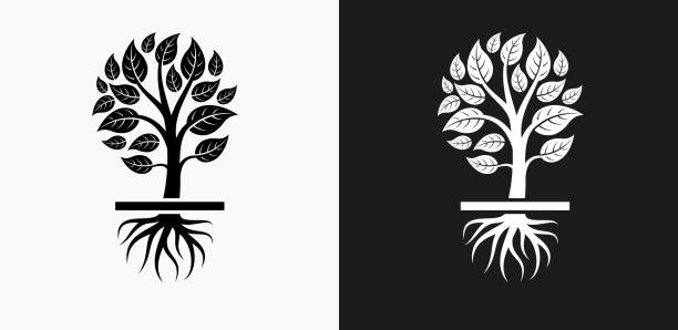 Tree Roots Illustrations, Royalty-Free Vector Graphics ...