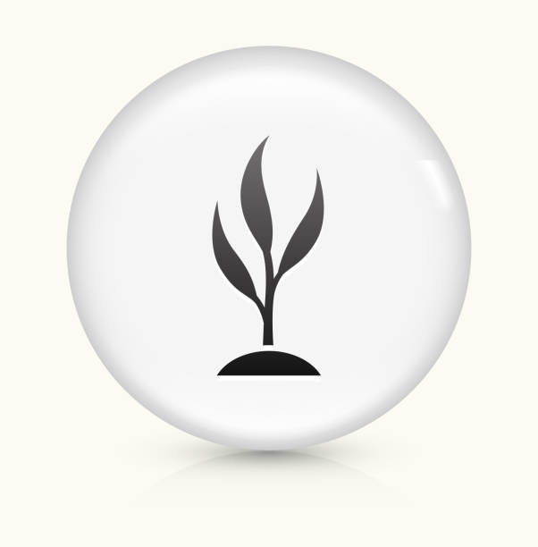 Wachsenden Baum Symbol auf einem weißen, runden Vektor-button – Vektorgrafik