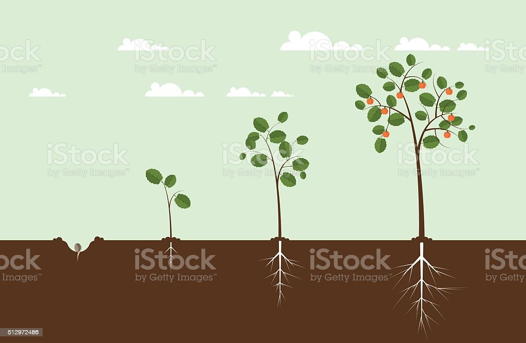 Growing Tree Illustration vector art illustration