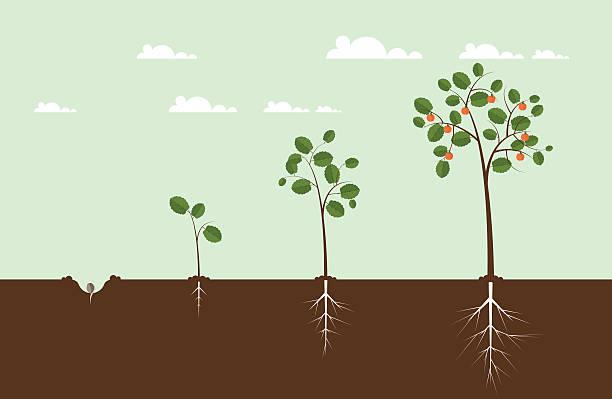 ilustrações de stock, clip art, desenhos animados e ícones de árvore em crescimento de ilustrações - alter do chão