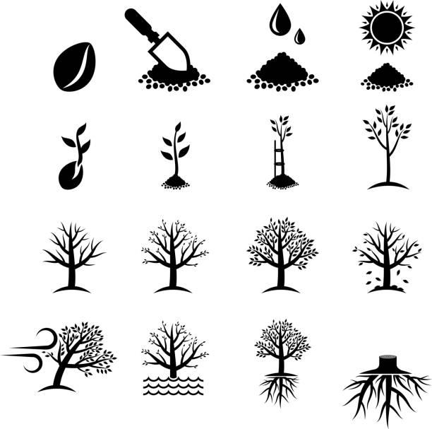 Growing Tree Process black & white vector icon set vector art illustration