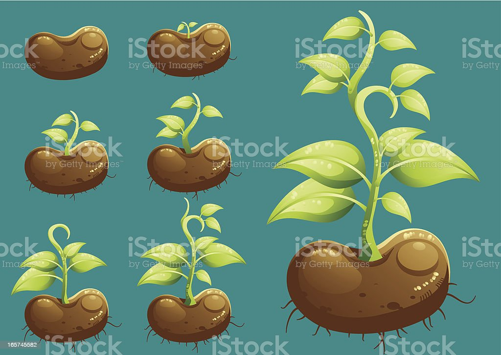 Growing royalty-free growing stock vector art & more images of bean