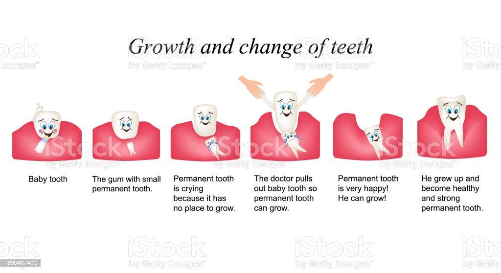 Ilustración de Crecimiento Y Cambio De Dientes En Los Seres Humanos ...
