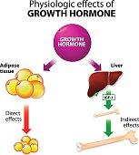 Growth hormone or somatotropin or somatropin