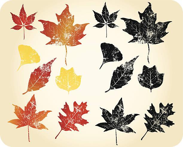 Grunge autumn leaves vector art illustration