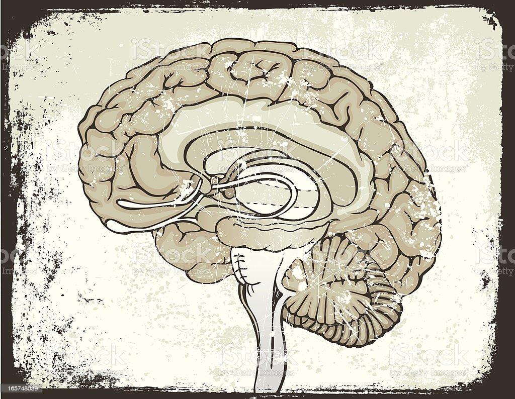 Grunge Brain vector art illustration