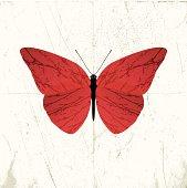 grunge butterfly illustration on scratch background