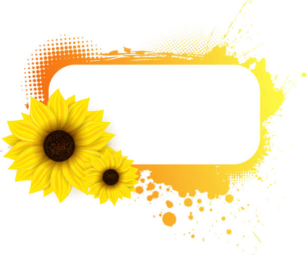 Best Sunflower Banner Pictures Illustrations, Royalty-Free ...
