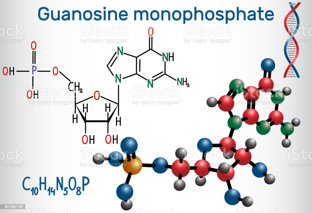 Guanosine Monophosphate Molecule It Is An Ester Of Phosphoric Acid