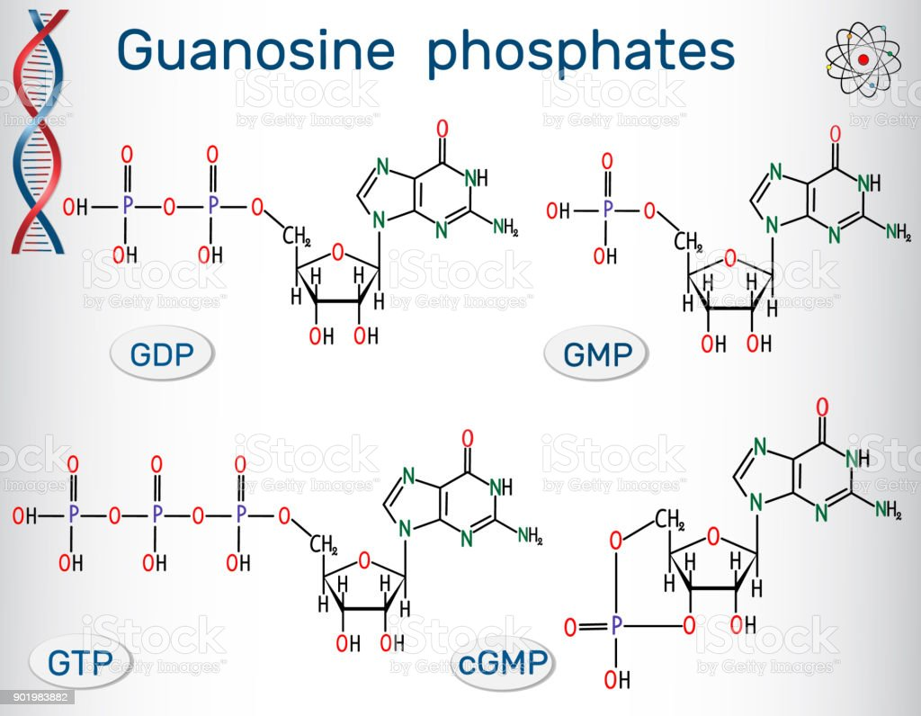 Guanosine Phosphates Structural Chemical Formula Of Phosphate