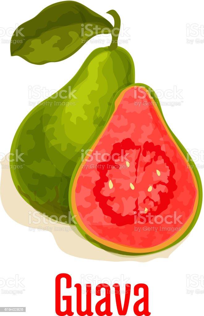Guava fresh juicy tropical fruit vector icon vector art illustration
