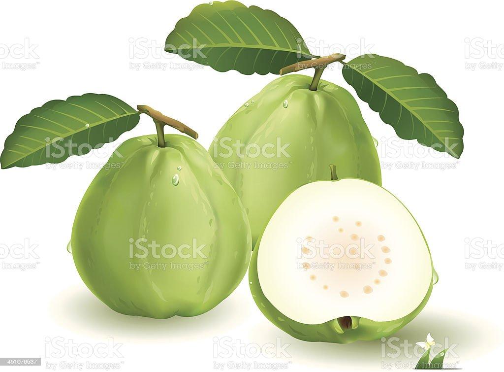guava clip art vector images amp illustrations istock