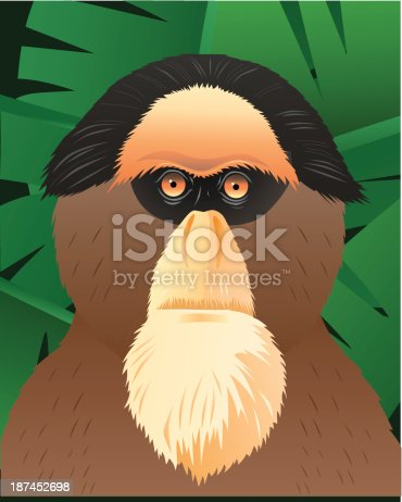 Vector illustration of a Guenon monkey.