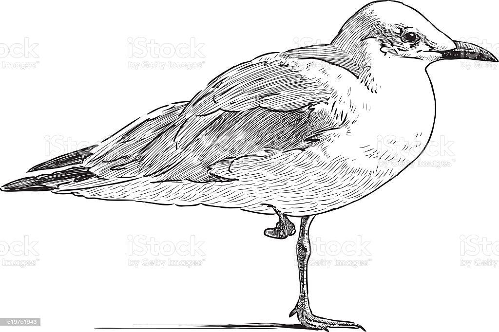 gull on the one leg vector art illustration