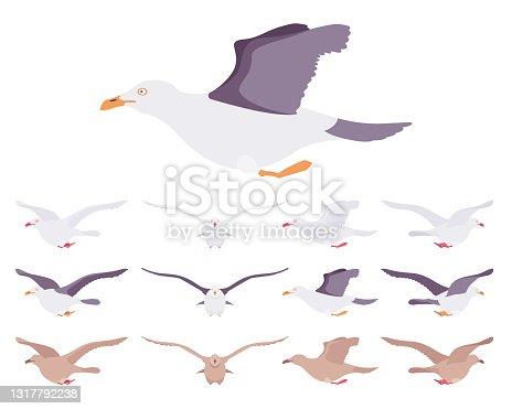 istock Gulls, seagulls wildlife seabirds in flight motion 1317792238