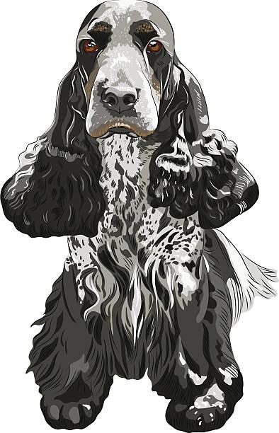gun hund englischer cocker spaniels sitzbereich - hundehaarbögen stock-grafiken, -clipart, -cartoons und -symbole