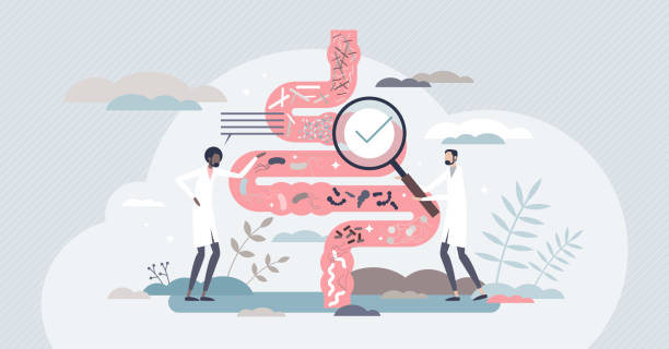 Gut flora and digestive tract microorganisms diagnosis tiny person concept vector art illustration