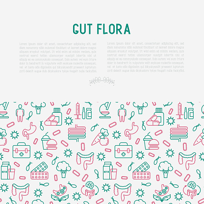 Gut flora concept with thin line icons: gut, bacteria, obesity, stomach, infection, depression, medicine. Vector illustration for medical survey or report.