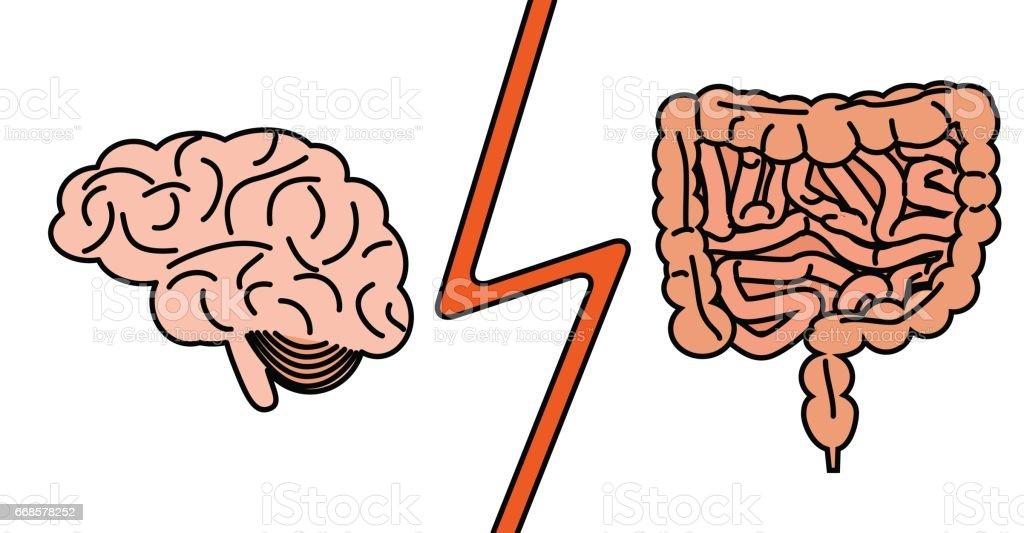 gut versus brain concept vector art illustration