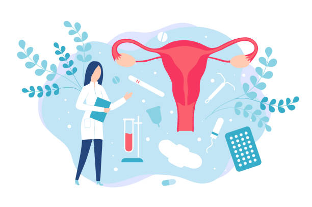 Gynecology and women health. Consultation with a gynecologist or reproductologist Gynecology and women health. Consultation with a gynecologist or reproductologist. Isolated vector illustration uterus stock illustrations